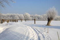 Kopfweiden im Winterkleid 06 by Karina Baumgart