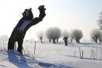 Kopfweiden im Winterkleid 03 von Karina Baumgart