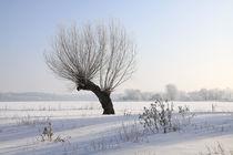Kopfweiden im Winterkleid 01 by Karina Baumgart