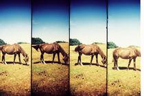 Horses by Giorgio Giussani