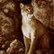 Wait-until-dark-cougar