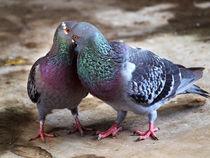 the couple by Patrio Jati