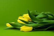 2008-03-07-tulipany-zelena09