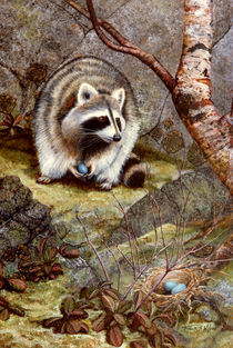 Raccoon Found Treasure von Frank Wilson