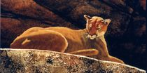 Detail of The Loner Cougar by Frank Wilson