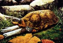 Wood Turtle von Frank Wilson