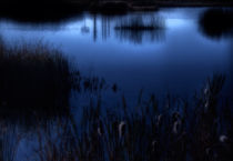 Evening at the Duck Pond by Douglas Pulsipher