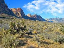 Desert Beauty von Frank Wilson