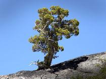 Determined-tree