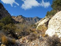 Desert Wilderness von Frank Wilson