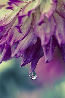 nach dem Regen by moqui