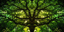 magictree by freedom-of-art