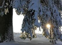 Schneelandschaft von Wolfgang Dufner