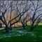 Trees-pepcicola-park-copy-copy