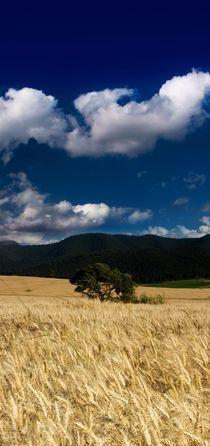 Golden Fields von Peter Zvonar