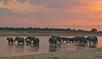Elephants crossing a river at dusk by Johan Elzenga