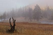 Yellowstone at dawn by Johan Elzenga