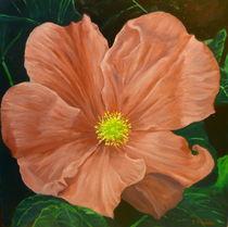 Wild Rose by Steven Guy Bilodeau