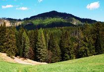 Forest Hill von Tomas Gregor
