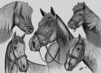 Horses for courses von Chris Cox