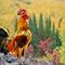 Cock-jerome-az-0317-4500x3000
