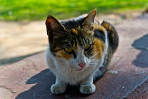 The Feline Touch by Samar Jha