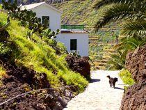 La Gomera, im Valle Gran Rey, Hund von jakuam