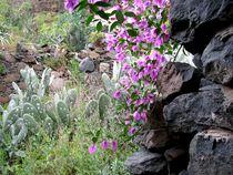La Gomera, Valle Gran Rey von jakuam
