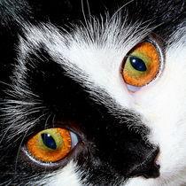 Katzenaugen von Christine Bässler