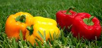 Chilli pepper 2 von Georgi Bitar