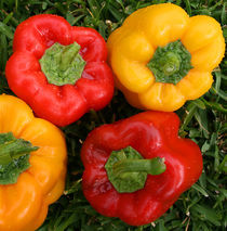 Chilli pepper by Georgi Bitar