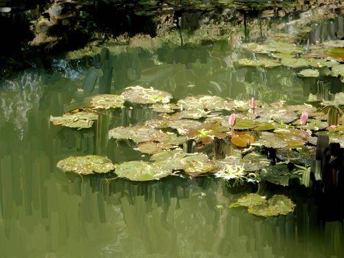 O-lotus-pond-2-9x12