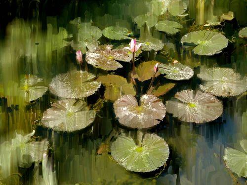 O-lotus-pond-3