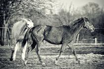 Horses by holka