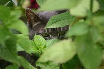 Cat Eyes von Robert E. Alter / Reflections of Infinity, LLC