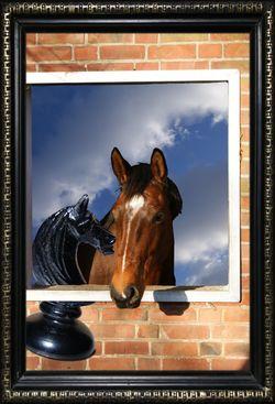 Precious-horse-framed