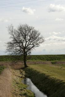 Tree von George Kay