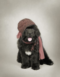Newfoundland Dog puppy by Waldek Dabrowski
