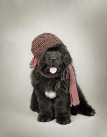 Newfoundland Dog puppy von Waldek Dabrowski