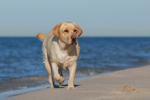 Dog on the beach by Waldek Dabrowski