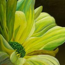 Chrysanthemum by Steven Guy Bilodeau