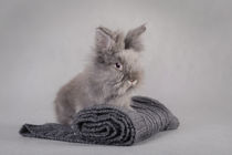 Rabbit at grey background von Waldek Dabrowski