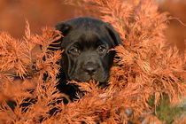 Autumn puppy by Waldek Dabrowski
