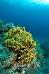 Coral garden by Konstantin Novikov