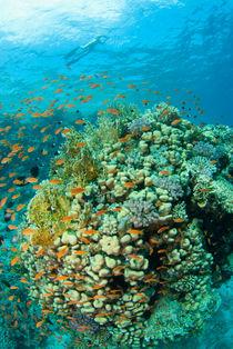 Reef von Konstantin Novikov