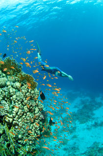 Freediver is swiming close to coral reef by Konstantin Novikov