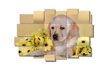 Labrador puppy and flowers mesh by Waldek Dabrowski