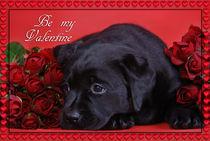 Labrador valentine card by Waldek Dabrowski