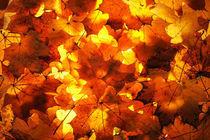 Autumn leaves by Waldek Dabrowski