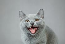 Angry kitten by Waldek Dabrowski